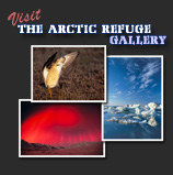 Visit the Arctic Refuge Gallery